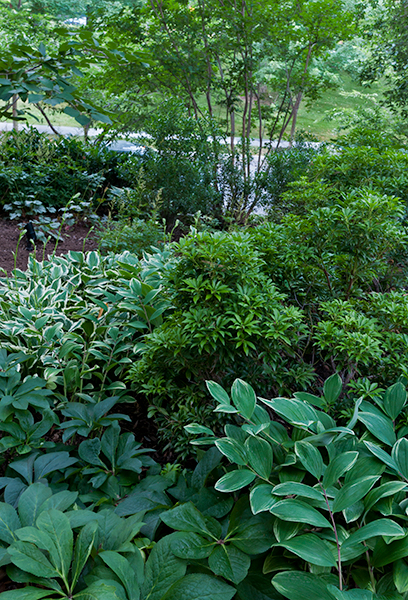 Mixed plantings of shrubs and perennials, many evergreen, keep the garden interesting year round.