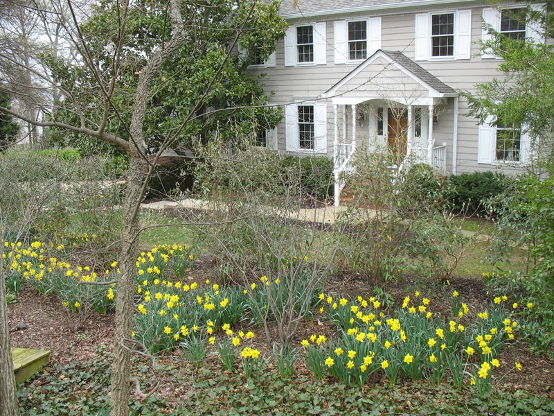 Daffodils and shrubs not yet fully leafed out frame the house.