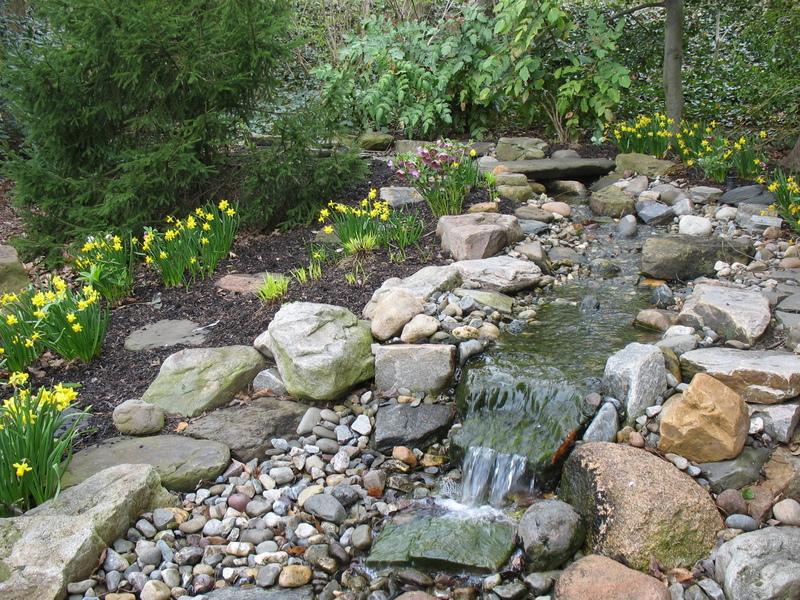 A stream with a small waterfall ends at the stone terrace. Daffodils and Hellebores add spring color.